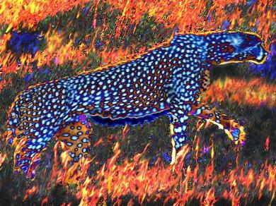 A cheetah seen in negative walks through a flaming savannah
