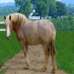 Horse's Regard