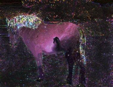 nighthorse