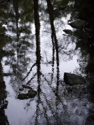 Muir Woods Reflection ~ BMD