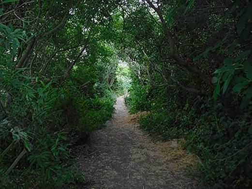 Follow the Path ~ Philip Brent Harris